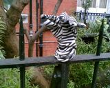 One zebra glove