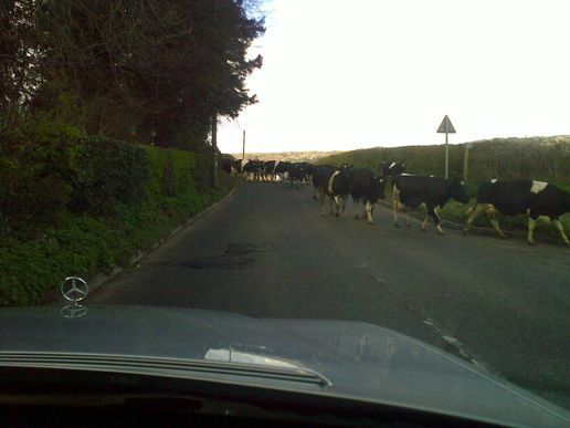 Traffic jam West Country style