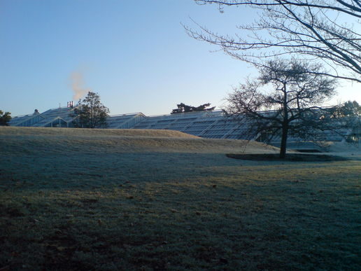Frosty grass and morning sunlight at kew