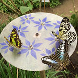 Stratford-on-avon Butterfly Farm