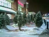 Christmas trees at the 24-hour supermarket...