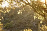 A spider web across a Palo Verde tree during sunrise.
