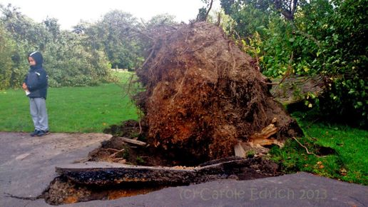 Wanstead after the #storm, #photos