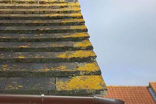 Lichen on the roof
