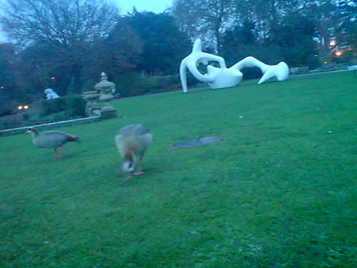 Artistic appreciation of Henry Moore by lovely Geese.