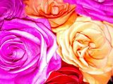 Psychedelic Overexposed Roses