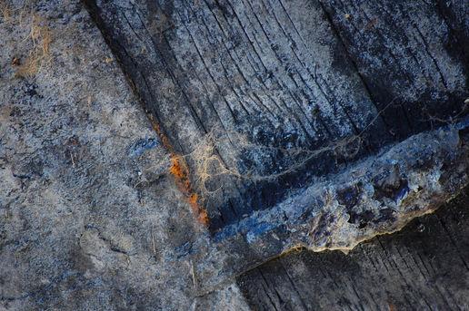 Textural Textural At Harry's Froglog