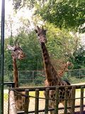 The Giraffes were my favourites!