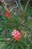 More Aussie bush flowers