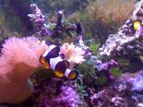 Finding Nemo @ Home!