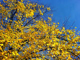 Blue skies & autumn leaves