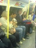 Puppy on the tube