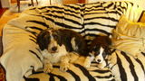 Ringo and Piri together on the couch