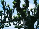 Cool trees in Rapperswil