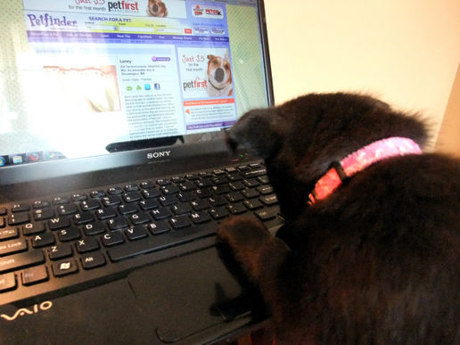 Checking her Petfinder ad to see why nobody is calling