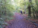 Autumn in Oxleas Woods