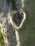 Heartwood (Variation on a theme)