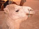 Sahara ... camels and horses...magical experience