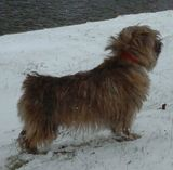 today in the snow...benji
