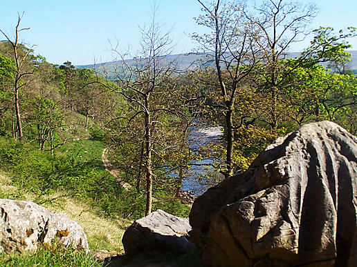 Where I went today - River Wharfe, Lower Grass Woods