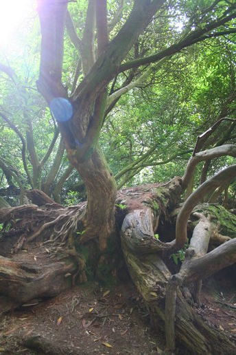 Cornwall: The Lost Gardens of Heligan: Part One