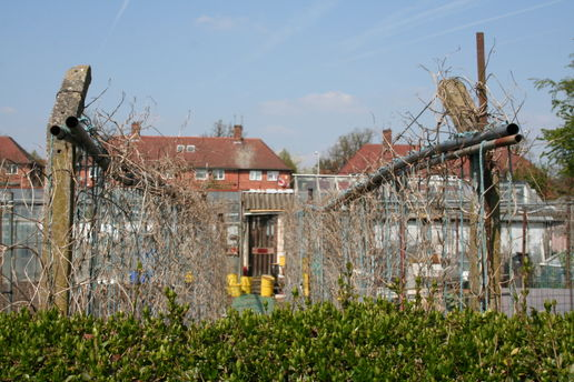 Whitemoor Allotments